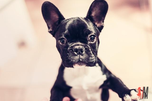 Psy z rodowodem – dlaczego warto?