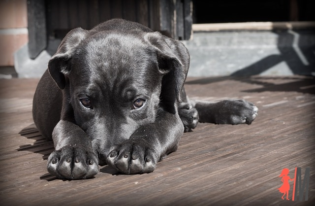 Wyprawka dla szczeniaka – co kupić?