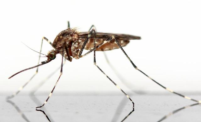Domowy sposób na komary, 4 sprawdzone metody