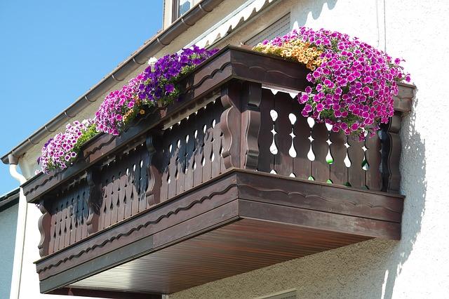 Jakie kwiaty na balkon? 3 balkonowe hity