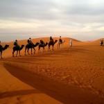 afrykańskie safari