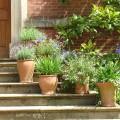 rośliny ogrodowe (2)