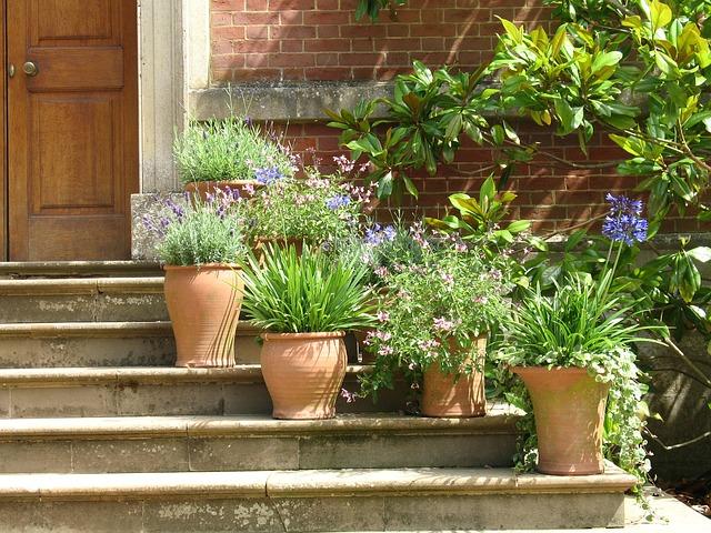 Rośliny ogrodowe do donic – wszystko co musisz o nich wiedzieć