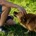 zwierzęta dla dzieci