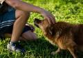 Zwierzęta dla dzieci, czy dla rodziców?