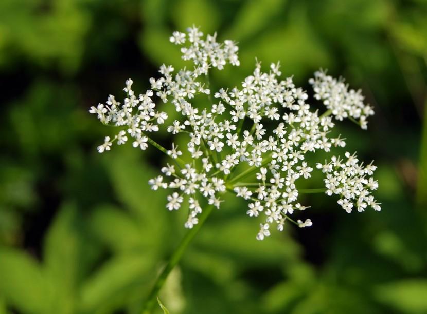 3 niebezpieczne rośliny, na które trzeba uważać